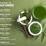 Ayurveda Branches