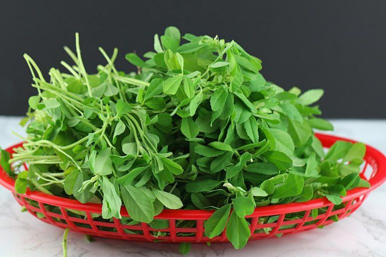 Fenugreek Herb – Uses And Side Effects
