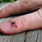 First Aid Treatment For Ticks, Mosquitoes Bites